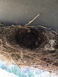 San Angelo Bird Nest