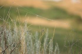 Antelope Island Spider