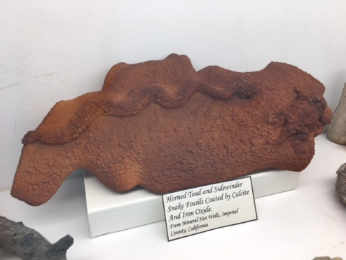 Horned Toad and Sidewinder Fossil