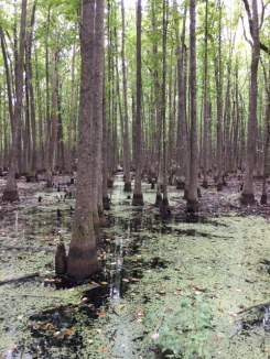 Swamp at Louisiana Purchase Park