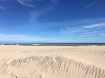 Sand Dunes on South Padre Island
